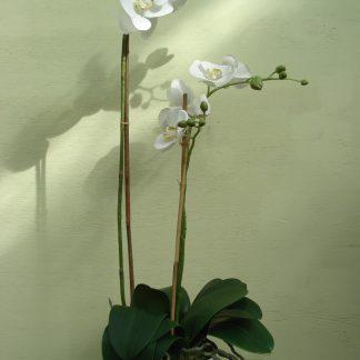 Foto van Phalaenopsis kunstbloemen
