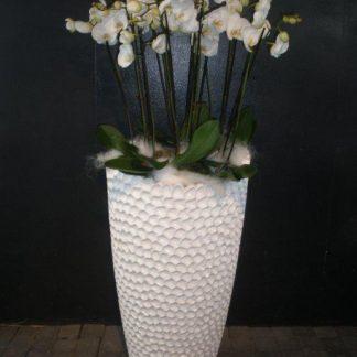 Foto van Phalaenopsis in zuil