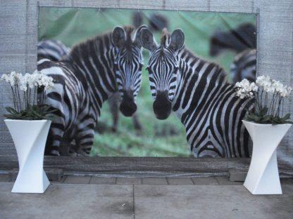 Foto van Decordoek Zebras
