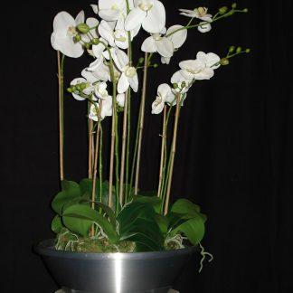 Foto van Phalaenopsis in aluminium schaal